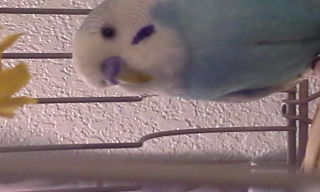 New Budgie Owner 1st Time & Need Help-20150127_170241%5B1%5D.jpg