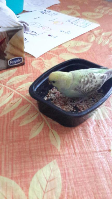Help identifying my birds mutation-20150323_182023_1427160499158.jpg