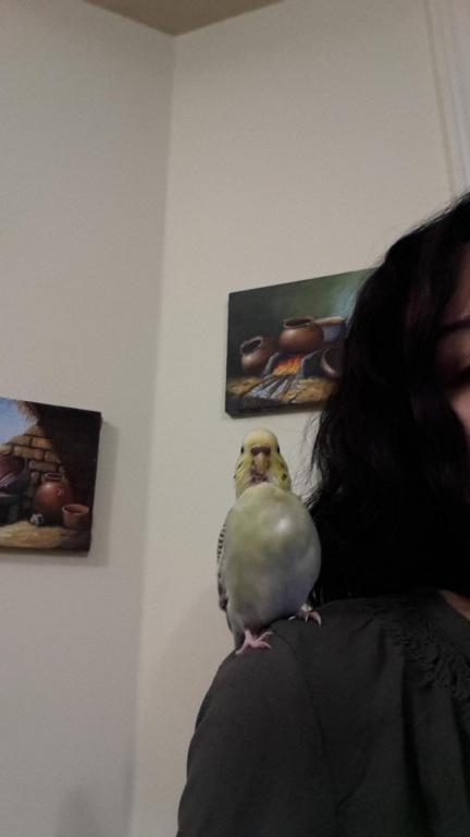 Help identifying my birds mutation-20150324_191828_1427239244792.jpg
