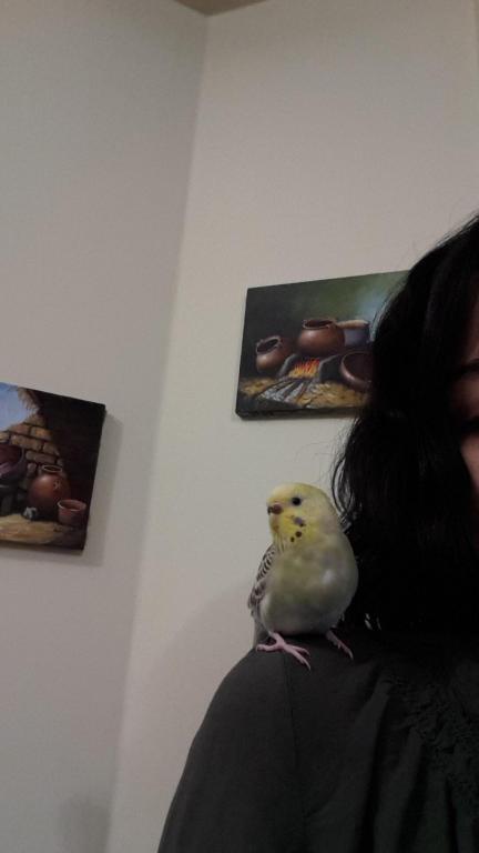 Help identifying my birds mutation-20150324_191900_1427239226741.jpg
