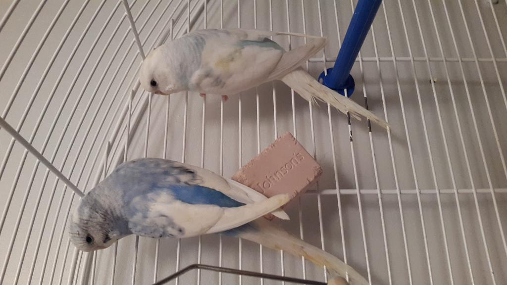 My pretty birdies <3-20150416_202928.jpg