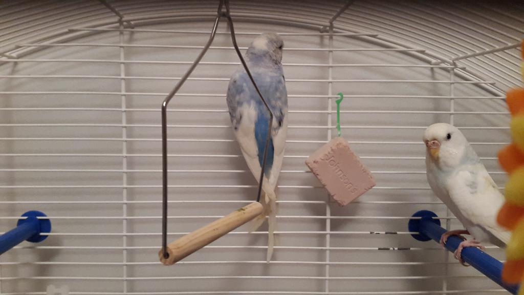 My pretty birdies <3-20150416_203037.jpg