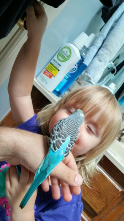 New Budgie Tickle!-20150621_145549_hdr.jpg