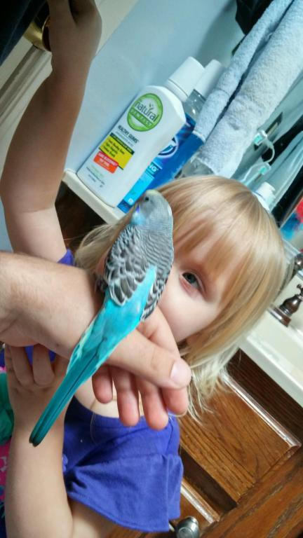 New Budgie Tickle!-20150621_145552_hdr.jpg