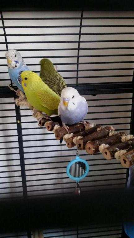 New to budgies and feel out of my depth-20150703_181445_1435945177841.jpg