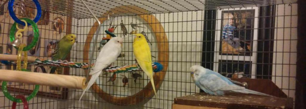 My feathered friends :)-20150804_204647_1440798554549.jpg