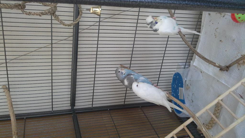 babies and dad in their new home-20150822_114902.jpg