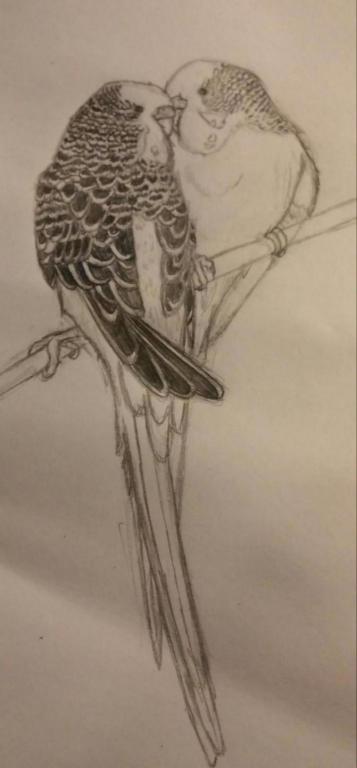 My drawings-20150929_155413-1_1443557347592.jpg