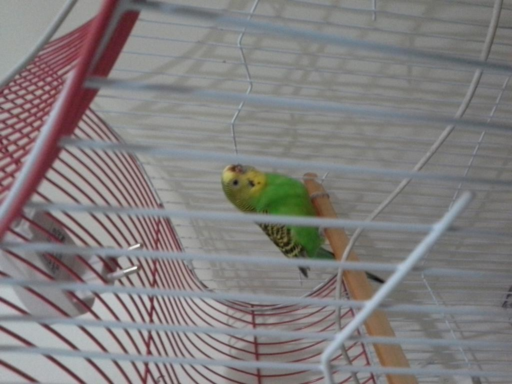 My budgie sneezes blood-20151221_073346.jpg