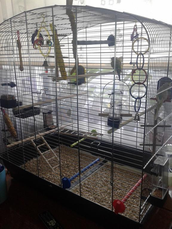 My budgie Cage!-20160319_154751.jpg