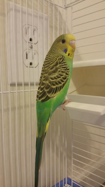 My new bird.-20161027_111134.jpg