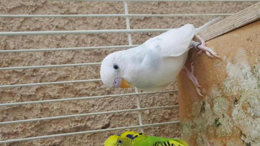 Is my parakeet a male or female?-20170316_142359_1489700317401.jpg