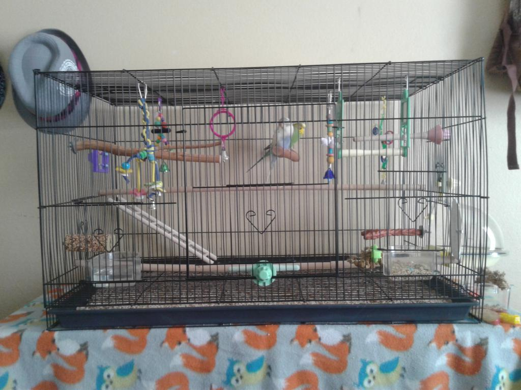 Is my cage good enough for my budgies?-20170514_172819.jpg