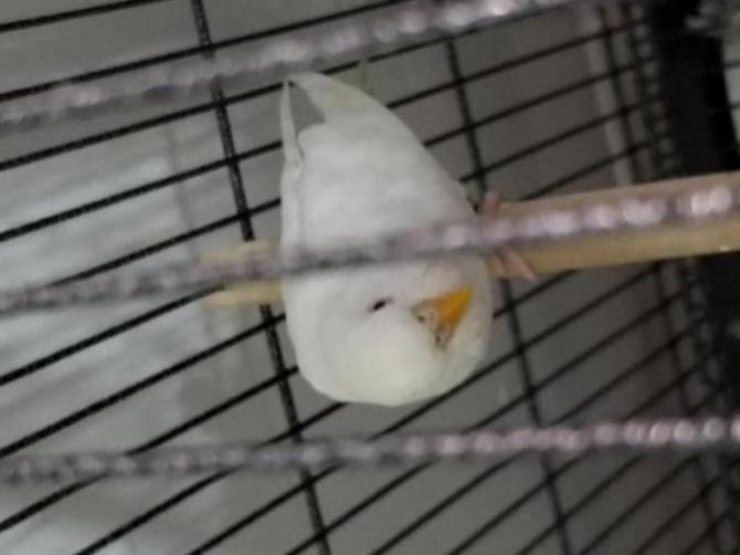 Need help to determine my albino male and female-20170604_062757_1496530590779.jpg