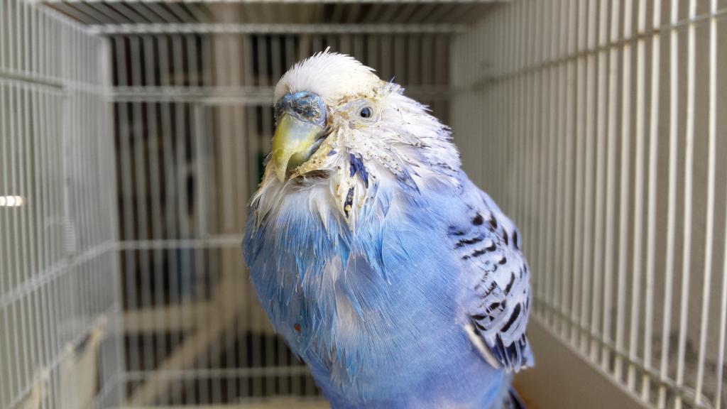 Sick bird (vomiting?)-20180207_103548.jpg