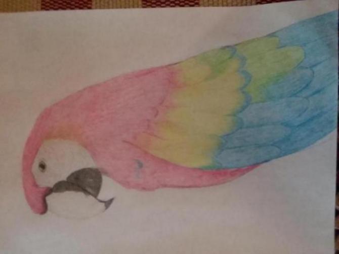 Henlo I drew scarlet macaw-20180407_105306_1523313974645.jpg