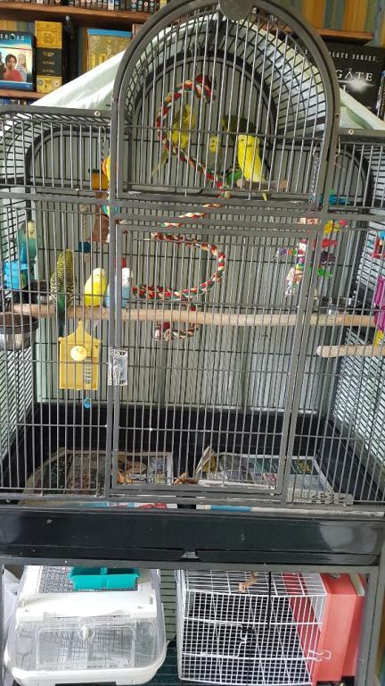 Rehoming my birds - London, UK-20200607_152448_resized.jpg