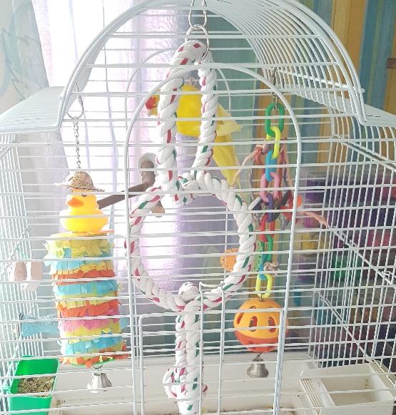 Rehoming my birds - London, UK-20200607_153514_resized.jpg