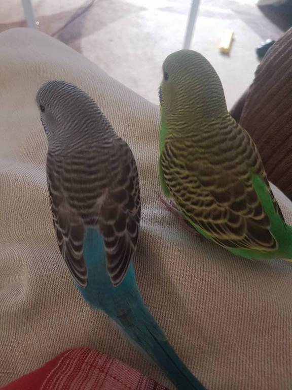 Gimlet and Henry's Ongoing Picture Thread-20992905_10159149964170257_5131966874825127215_n.jpg