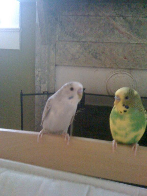 What color is my bird?-228.jpg