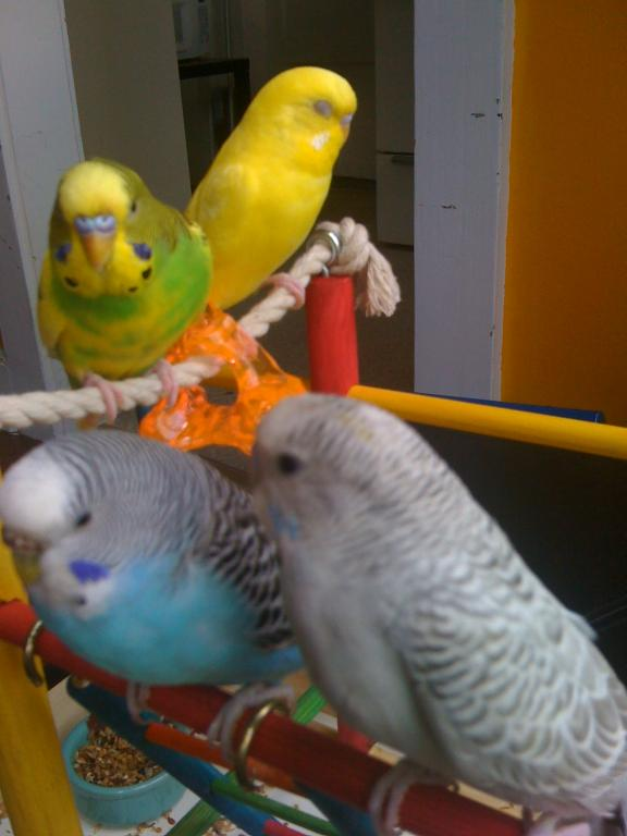 What color is my bird?-266.jpg