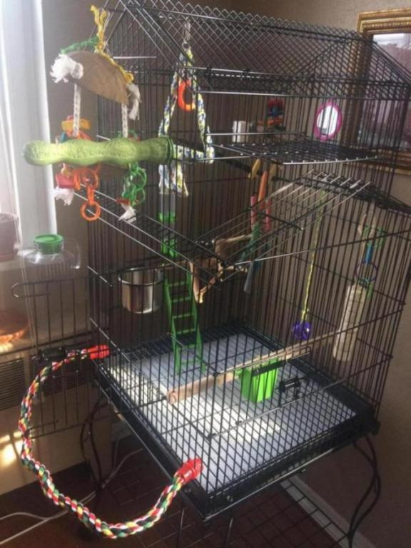 Cage Is All Ready for My First Cockatiel-2943198a-61a3-474f-9914-355ee2a71767_1553897335009.jpg