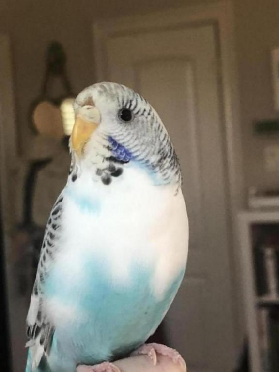 Dirty bird or sick?-2afc0642-0ef8-43c8-860a-aa90285cc280_1532125059775.jpg