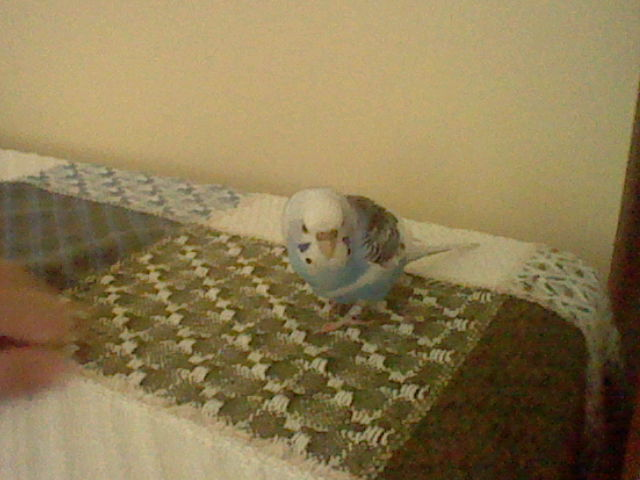 A Budgie Visitor-3ds-sd-card-081.jpg