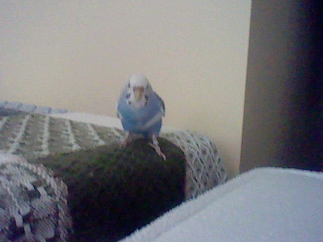 A Budgie Visitor-3ds-sd-card-084.jpg