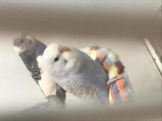 Buddy has a new buddy Coco-6fbdeaf1-678d-416f-b778-87929c6cd0fe_1606540413327.jpg