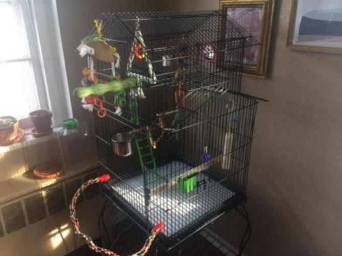 Cage Is All Ready for My First Cockatiel-773b428f-fe86-4bf3-a770-b67d122654e5_1553897351221.jpg