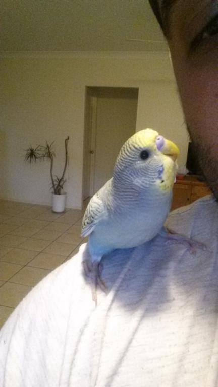photos of my birds:)-8.jpg