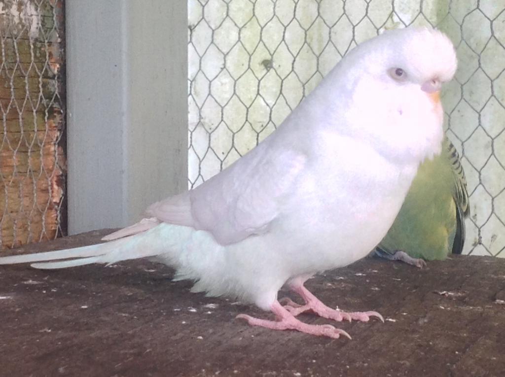 Newest Hatchlings-855.jpg