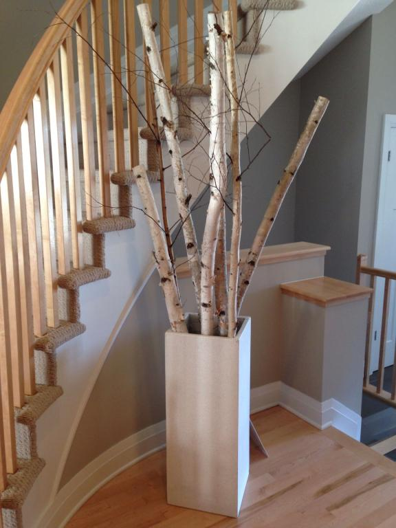 are birch tree trunks safe for budgies?-8d9022cc52d91daad01a1839ee921356.jpg