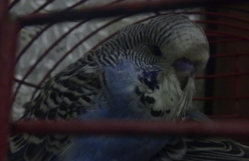 Are they show bird babies-9.jpg