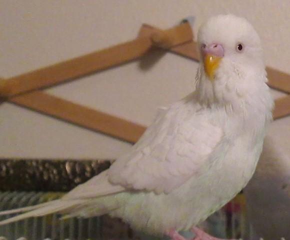Albus needs a new home-albus-photo-2.jpg