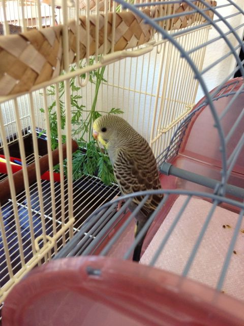 Help with Color & Mutations Please?-asahi-conemplating-his-new-home.jpg