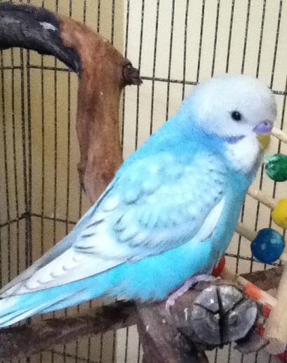 Pretty little Azure-azure.jpg