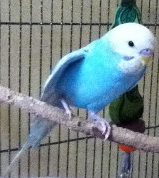 Pretty little Azure-azure2.jpg