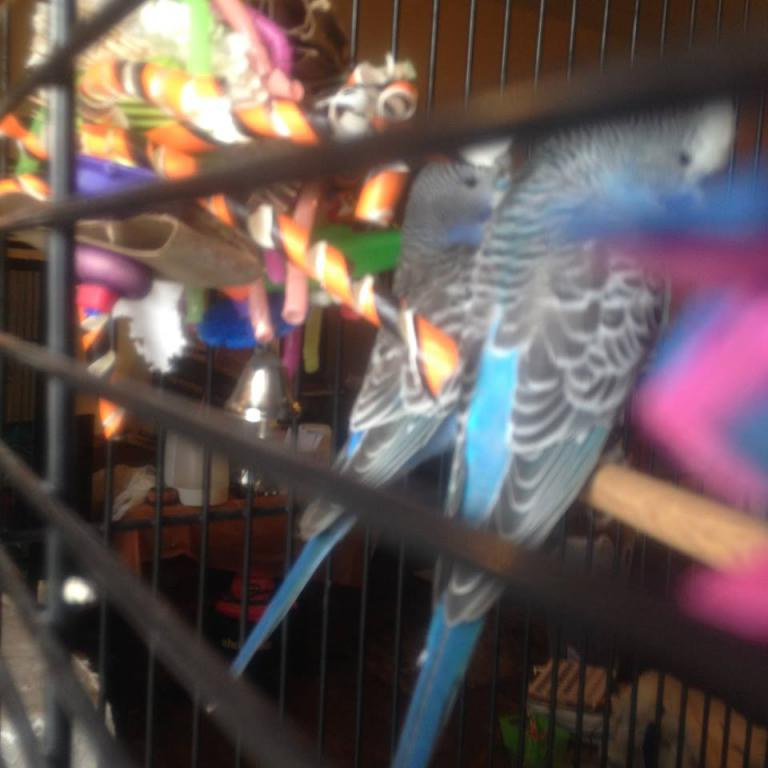 Meet Pippin and Maui-backs-show-color.jpg
