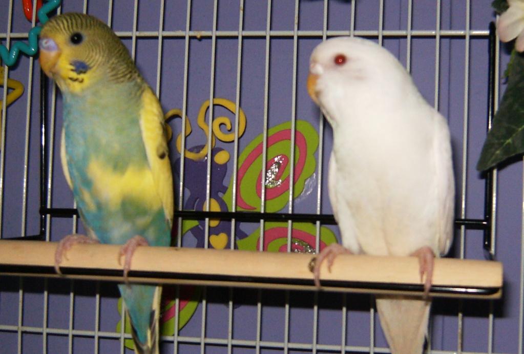 New feathered friends-baseball001.jpg