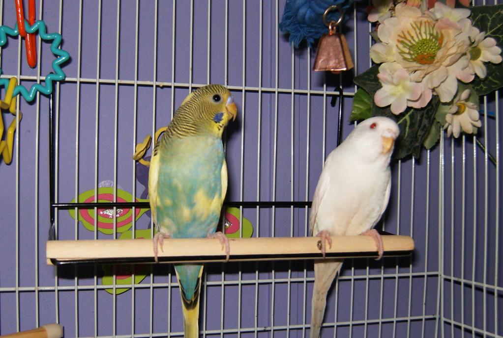 New feathered friends-baseball002.jpg