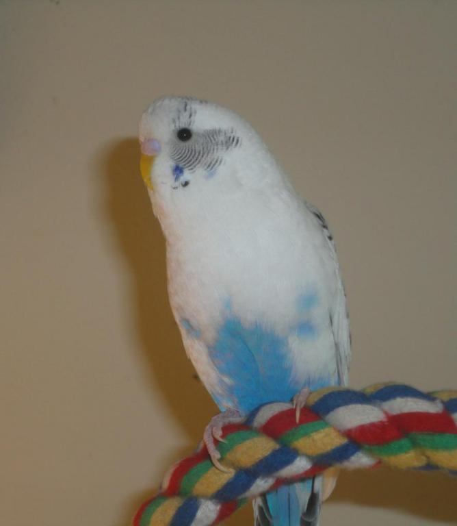 Cute pictures of Snowy, Kiwi, Limon and Edward (Ongoing Thread)-bebe_zps165f4761.jpg