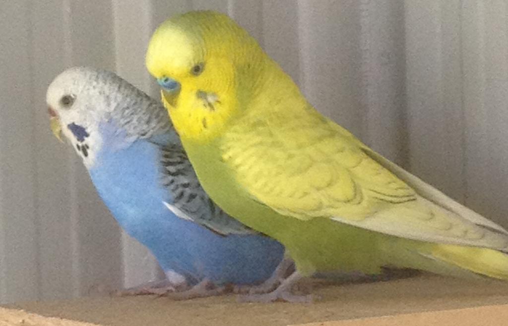 what will be the chicks outcome?-bella-jinga.jpg
