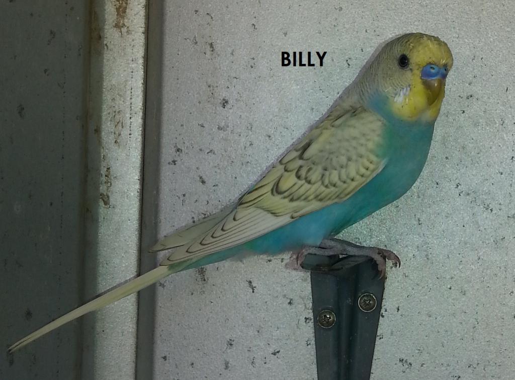 Fly High Billy-billy.jpg