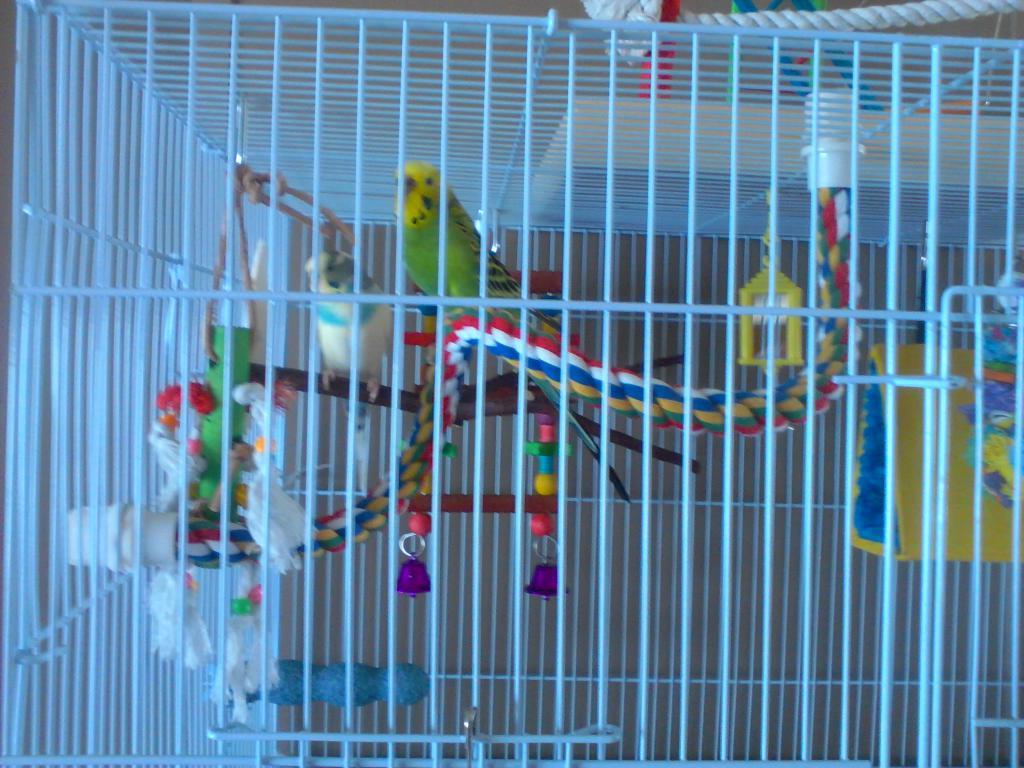 Cage Setup Idea for 2 budgies-bird-cage-setup-005.jpg