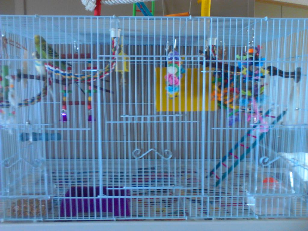 Cage Setup Idea for 2 budgies-bird-cage-setup-008.jpg