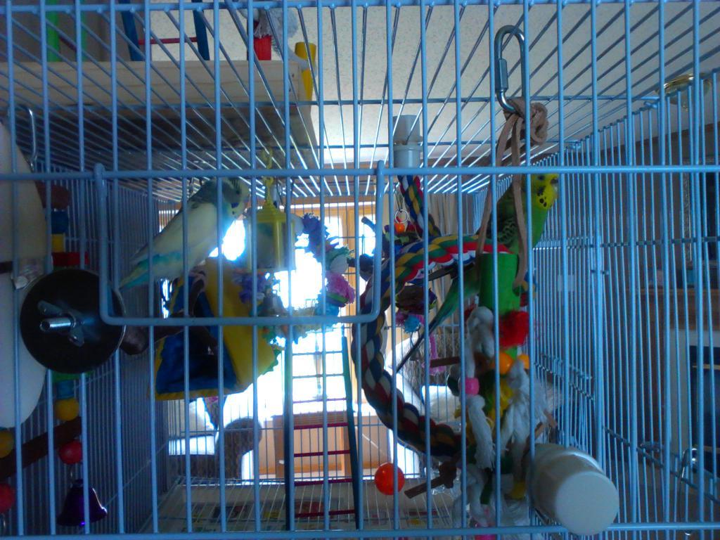 Cage Setup Idea for 2 budgies-bird-cage-setup-012.jpg