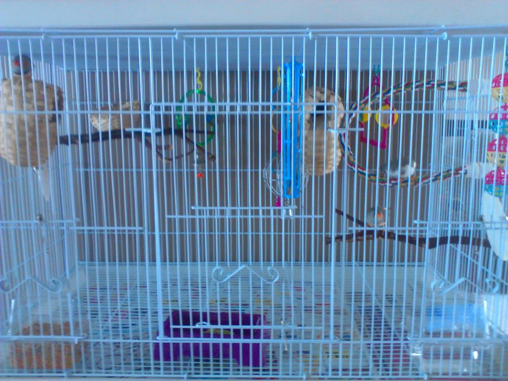 Pics of Finches-bird-cage-setup-013.jpg