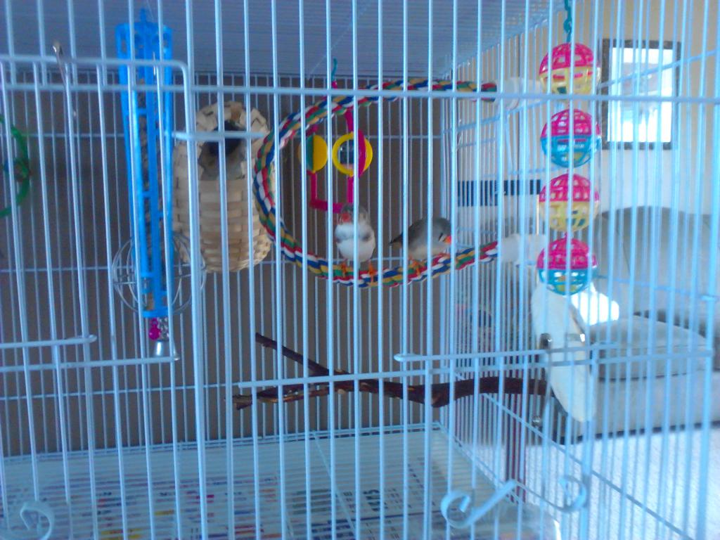 Pics of Finches-bird-cage-setup-018.jpg